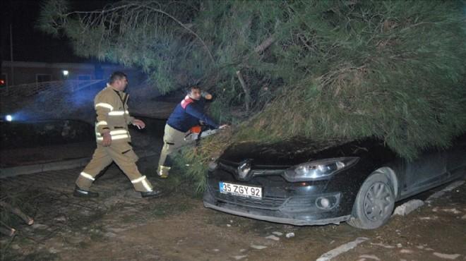 20 metrelik ağaç arabanın üzerine devrildi