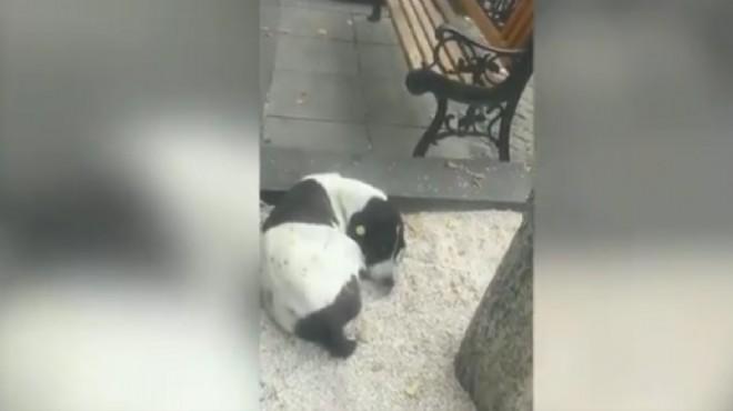 3 yıl önce kaybettiği köpeğini sokakta buldu