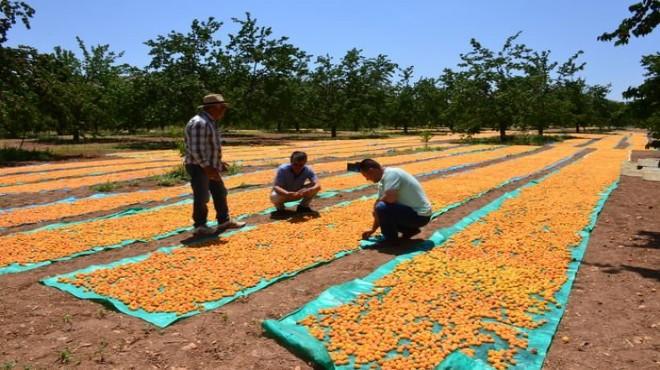 Anlaşmalı organik tarım üreticinin yüzünü güldürdü