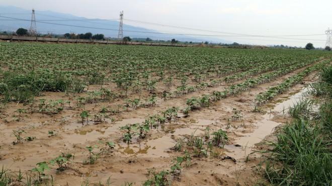 Aydın'da dolu ve sağanak ekili alanlara zarar verdi