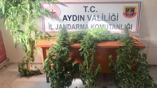 Aydın'da zehir operasyonu: 3 tutuklama