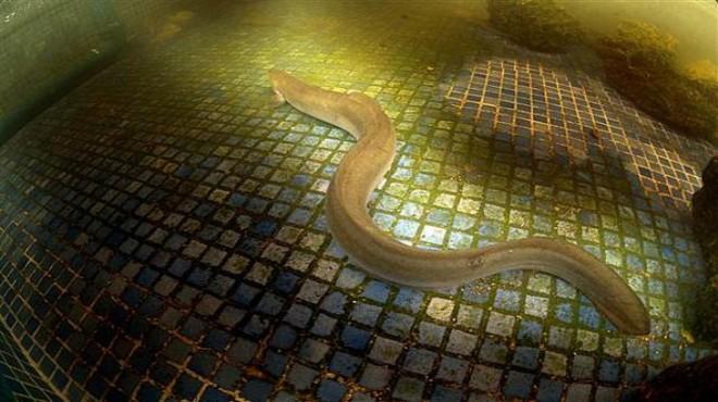 Bafa Gölü'nde hayal bile edilemeyecek görüntüler