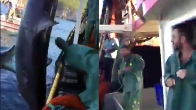 Bunu da gördük: Köpek balığına şiddet!