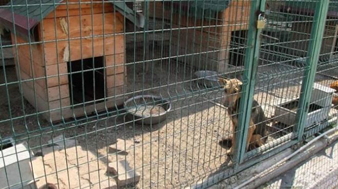 Belediye barınağında hayvanların asitle öldürüldüğü iddiası!