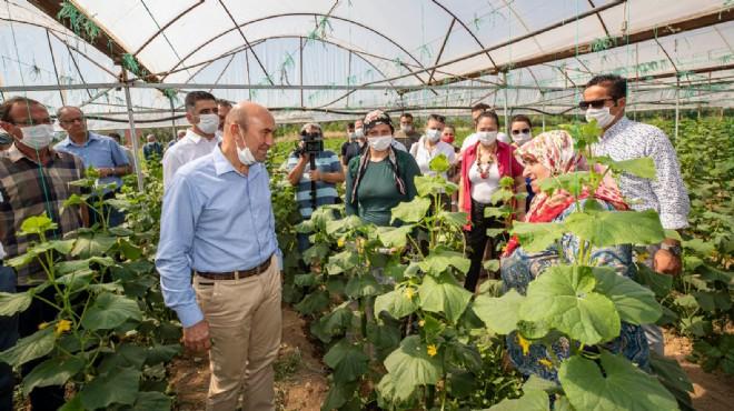 Bir destek de Menderesli üreticiye: Büyükşehir 200 ton salatalık aldı