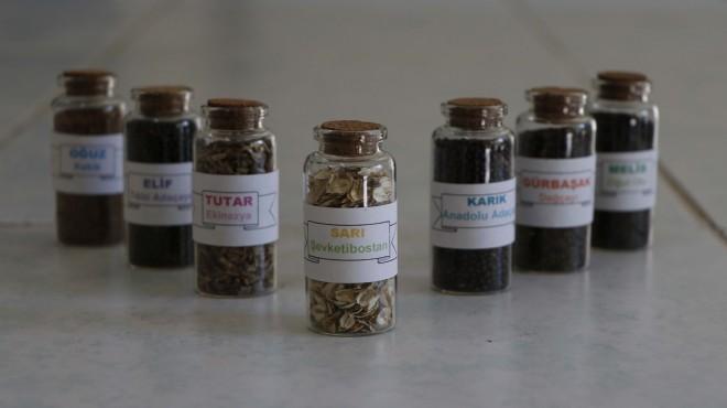 Ege'den üreticiye müjde: 7 yerli tohum toprakla buluşuyor
