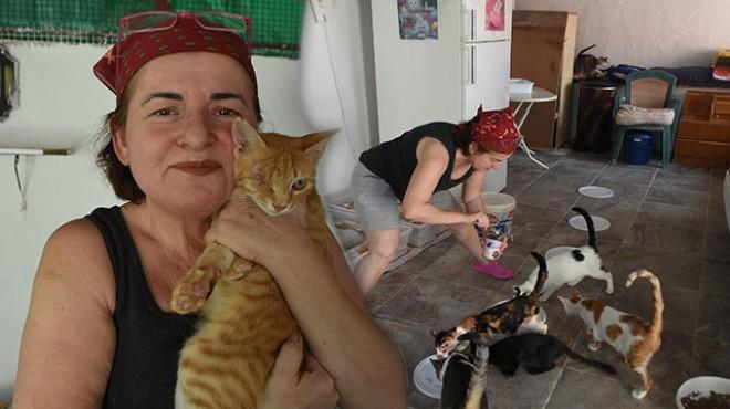 Evinde 80 kedi ile yaşıyor