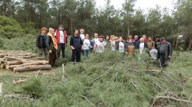 Foça'daki ağaç katliamı Meclis gündeminde!