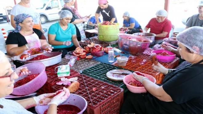 Foçalı kadınlar narlı türküler eşliğinde nar ekşisi üretiyor