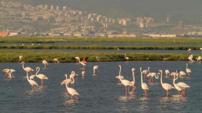 Gediz Deltası için UNESCO Dünya Doğa Mirası talebi