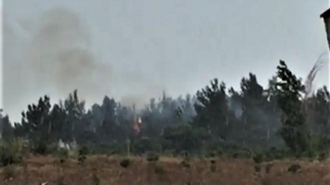 İzmir'de ağaçlık alana düşen yıldırım nedeniyle yangın çıktı