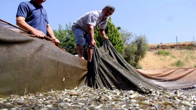 İzmir'de barajlara 1 milyon 450 bin yavru balık