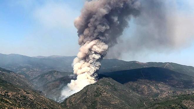İzmir'deki zeytinlik alanda yangın çıktı