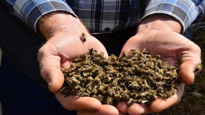 Manisa'da 5 milyon arı telef oldu!