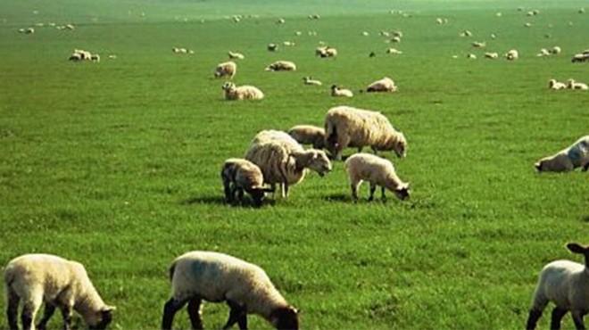 Manisa'da kaybolan 71 yaşındaki çoban bulundu