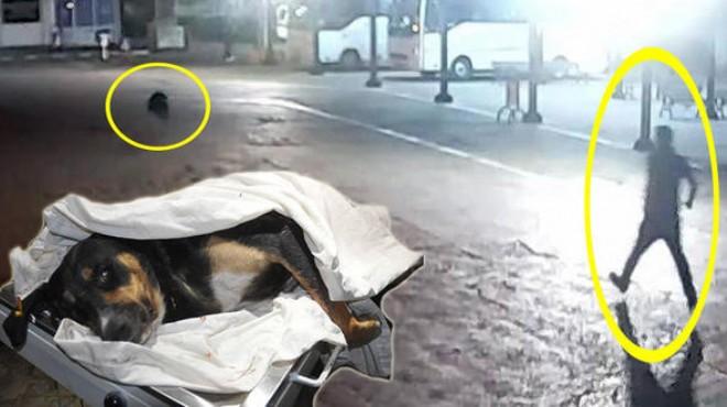 Muğla'da köpeği bıçaklayan adamın görüntüleri ortaya çıktı