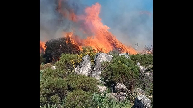 Muğla'da yangın çıktı: Bir hektar alan kül oldu!
