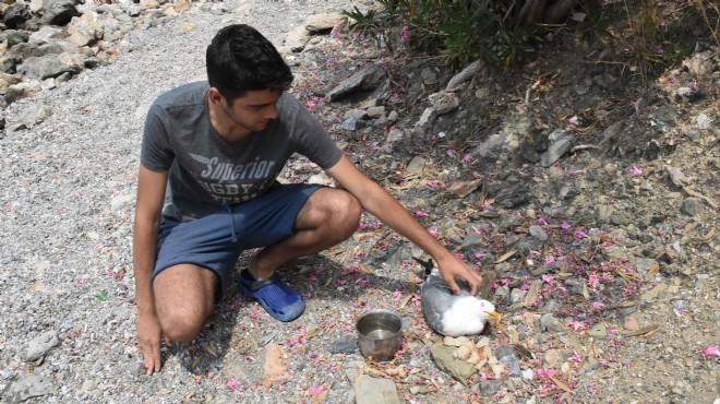 Muğla'da yürekleri ısıtan görüntü
