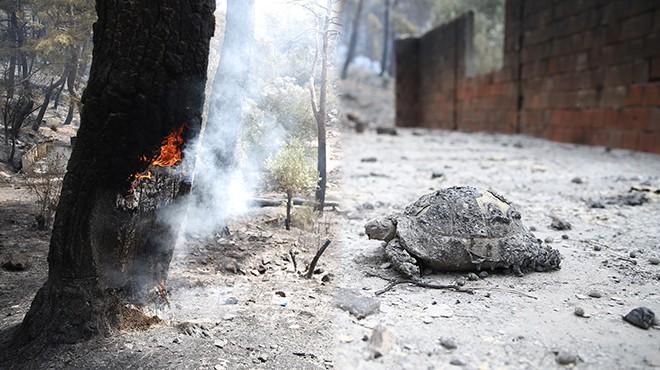 Muğla'daki yangın sonrası kahreden görüntüler