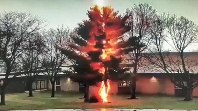 Okul bahçesine yıldırım düştü: Ağaç ikiye yarıldı!