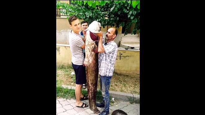 Oltayla 2 metrelik yayın balığı yakaladılar