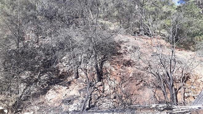 Ormanlık alanda çıkan yangında yüzlerce ağaç küle döndü