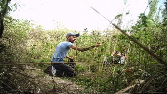 Ormanlık alanda uyuşturucu ektiler, tutuklandılar