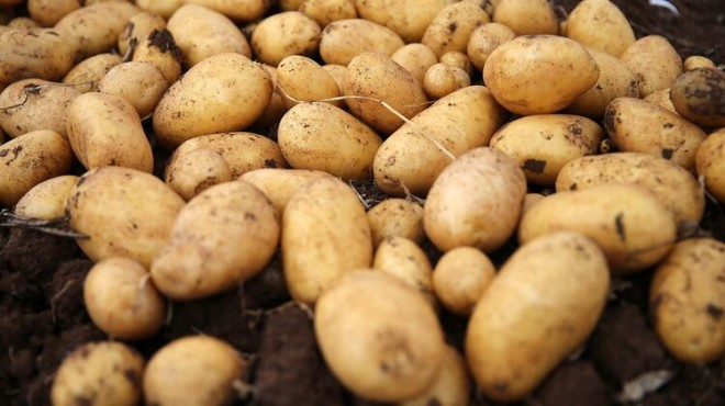 Patateste 'korona' fırsatçılığı