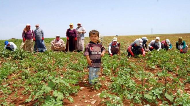 Prof. Dr. Mustafa KAYMAKÇI yazdı... Mevsimlik işçilerden haberimiz var mı?
