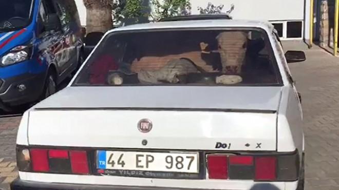 Şaşkınlık veren olay! Otomobillerin içinden çalıntı inekler çıktı
