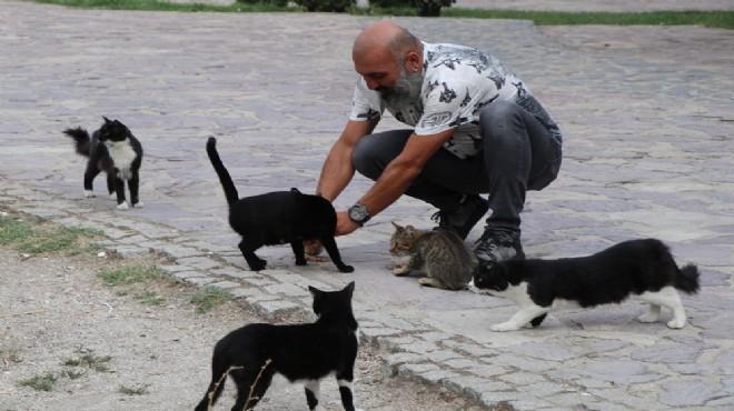 Sokak kedilerinin kaderini mahkeme belirleyecek