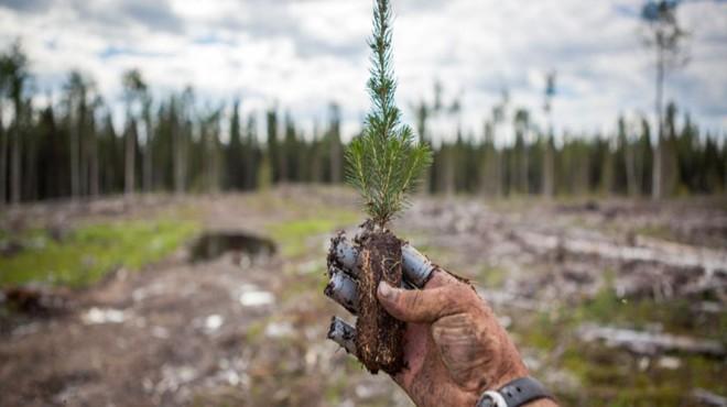 Yangına hassas alanlara ateşe dayanıklı ağaç türleri dikiliyor